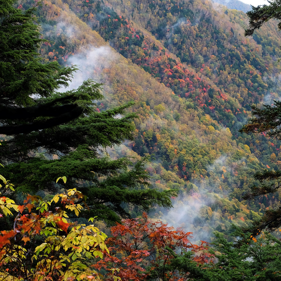 Fall Colors on the Slopes of Mt. Jonen, Nagano