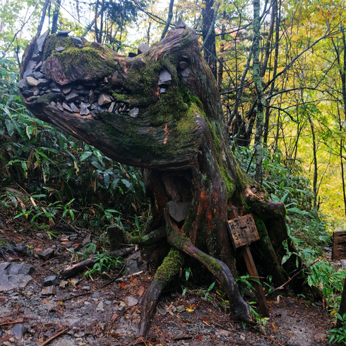 The Famous Godzilla Tree, Nagano