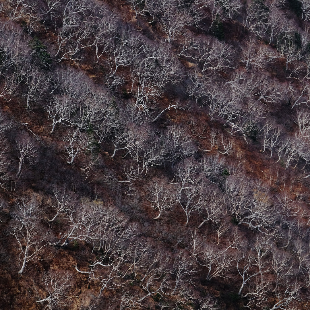 Naked Trees in Late Fall, Nagano