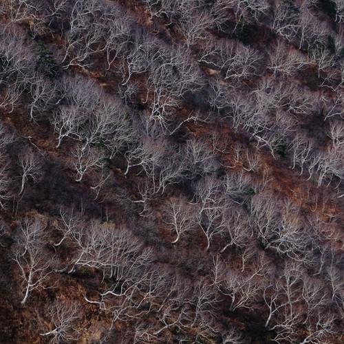 Naked Trees in Late Fall, Nagano