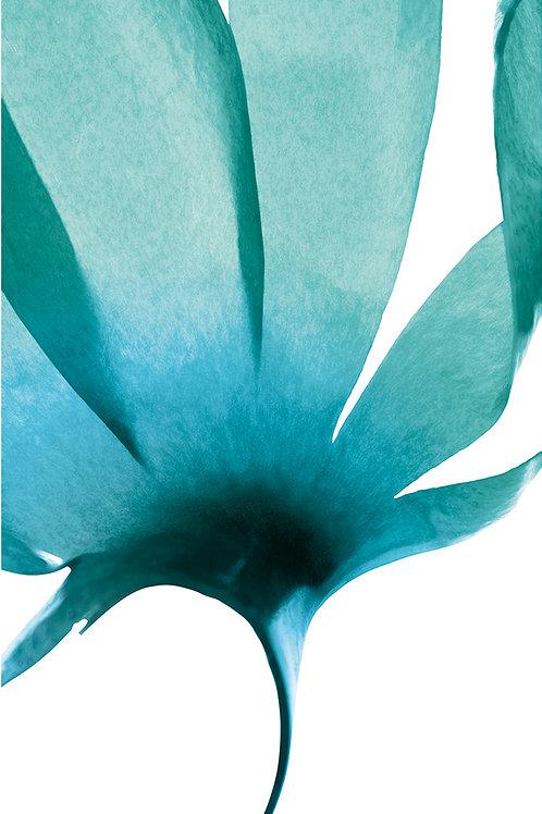 Enveloppement marin Aromacéane & son Massage Dos