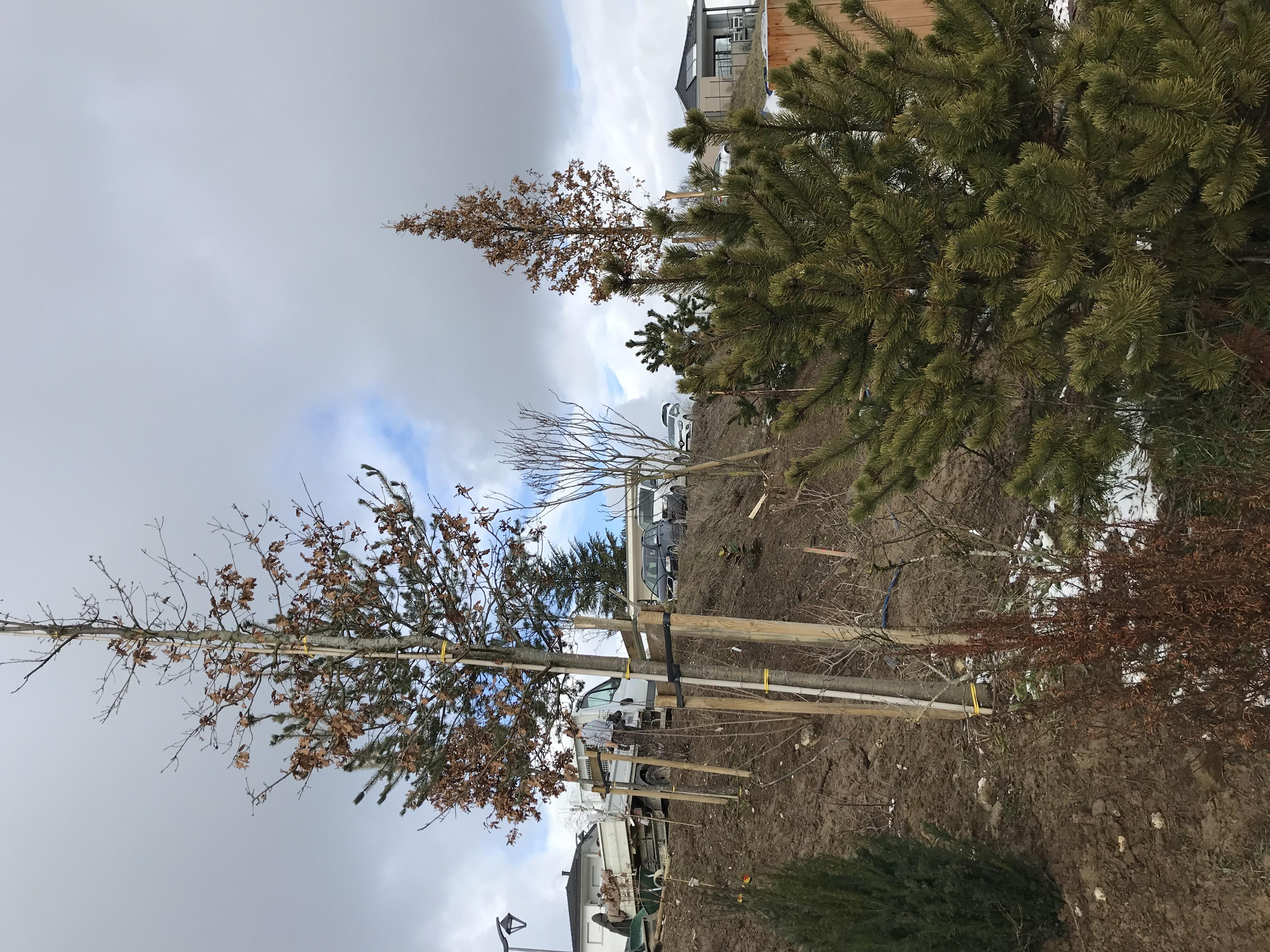Pins à crochets, chênes cerris et pins s