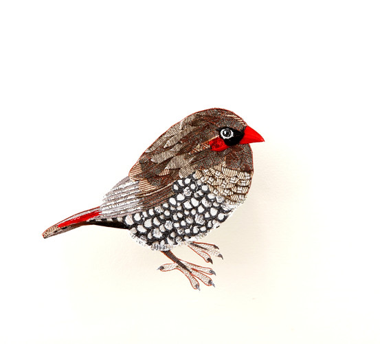 Fire-tailed finch