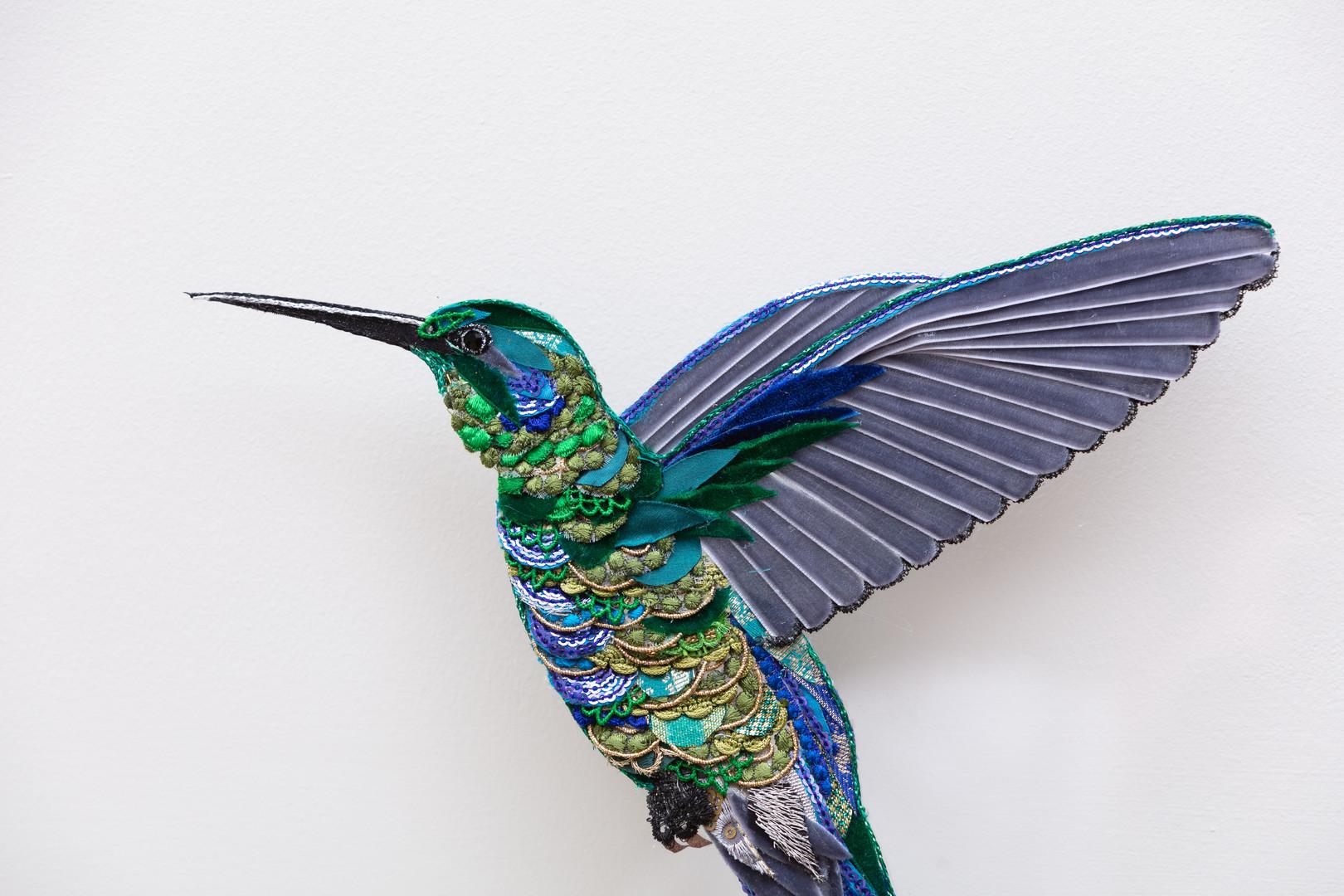 Flying Violet Ear Hummingbird