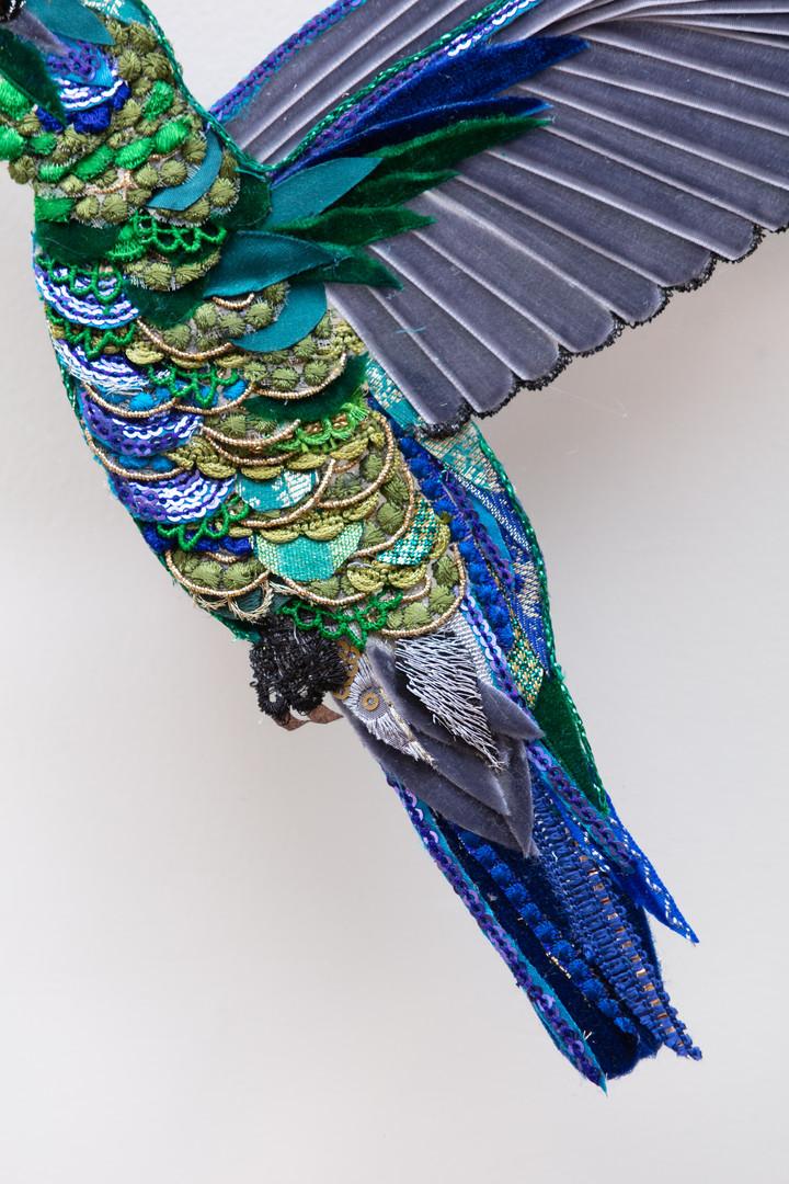 Violet Ear Hummingbird Details