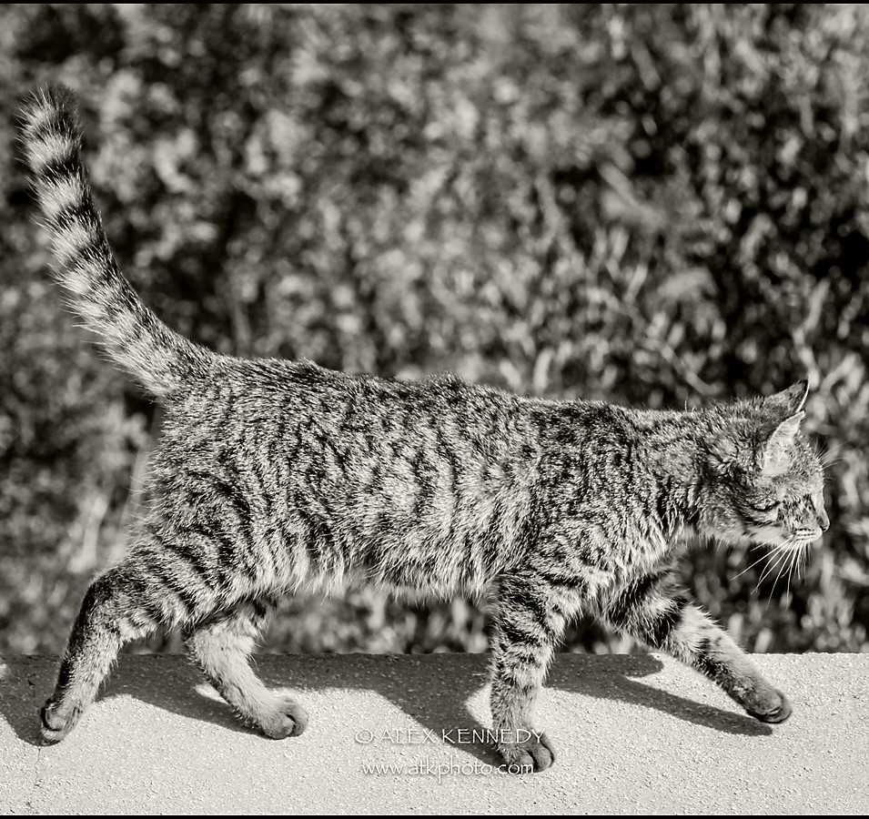 Bespoke, contemporary creative and natural cat portrait photography in wiltshire