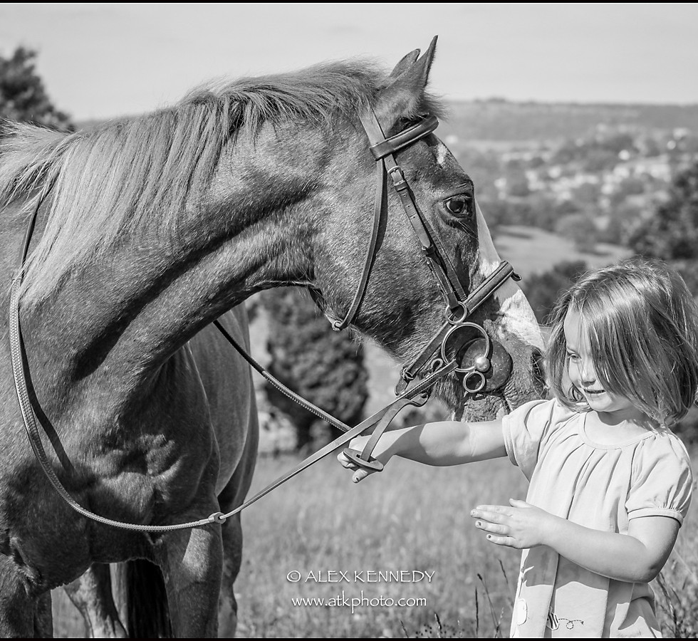 Equine portrait photography in Gloucestershire