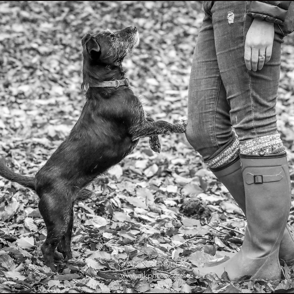 Paterdale Terrier - pet photography in wiltshire