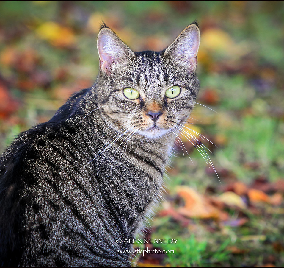 bespoke, contemporary, creative and natural cat portrait photography in Wiltshire