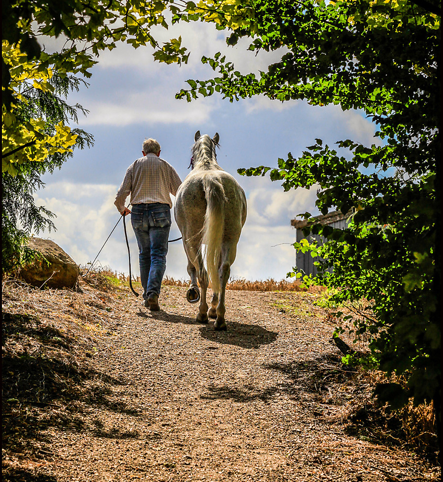 Bespoke contemporary equine portrait photography in Wiltshire