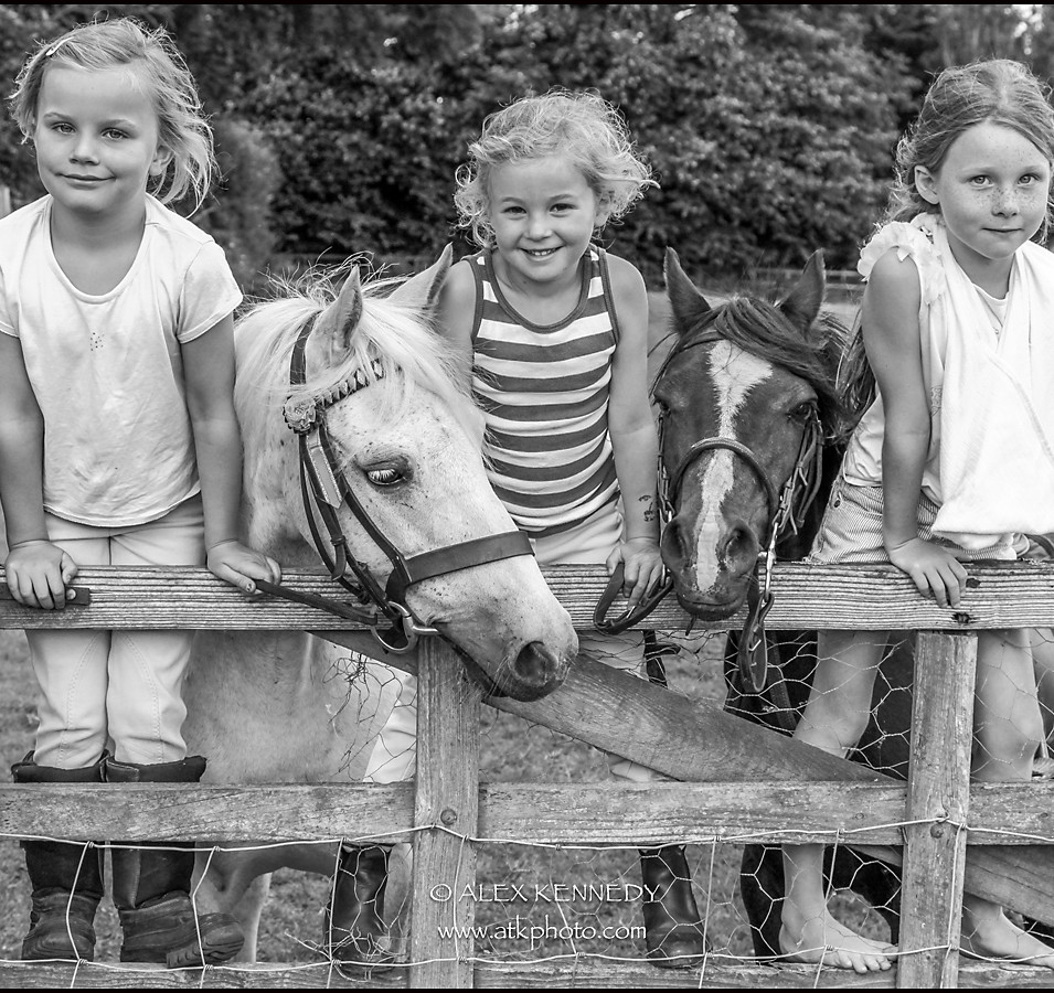 Contemporary bespoke equine portrait photography in Wiltshire
