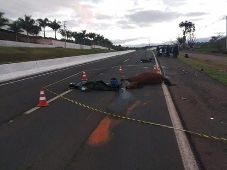 Homem morre após colidir com a motocicleta contra animal na rodovia PR-445