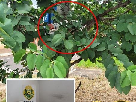 Após denúncia, PM encontra arma de fogo escondida em árvore no centro de Rondon