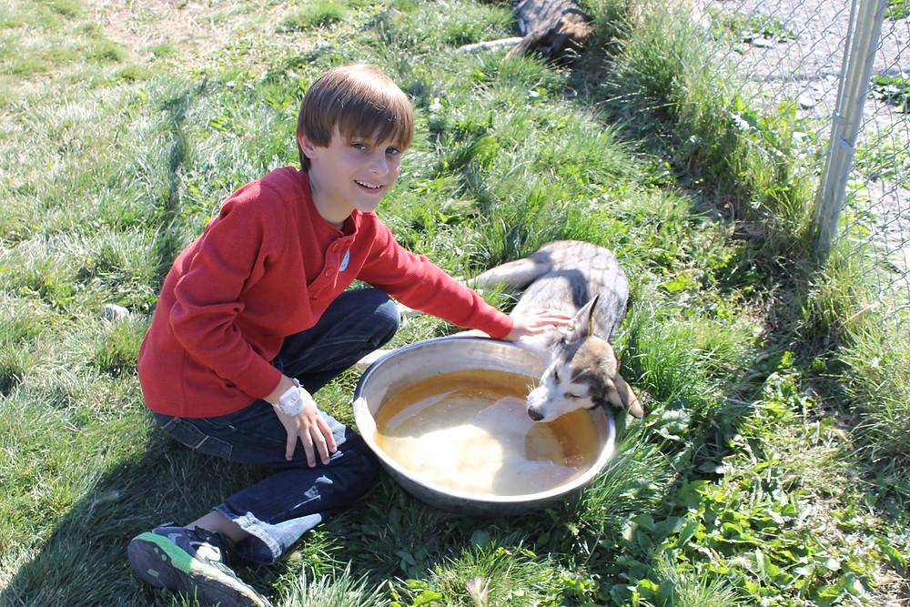 Caribou Crossing Dog Sled Yukon Territory