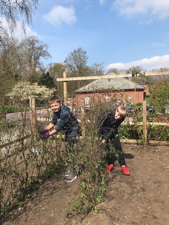 Great Turnout of Volunteers in the Vegetable Garden