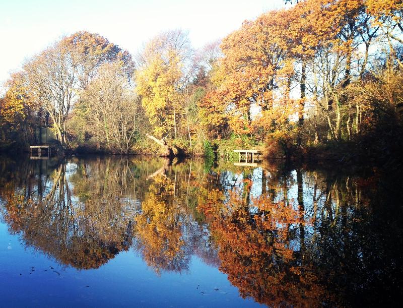 Pond Nov_edited.jpeg
