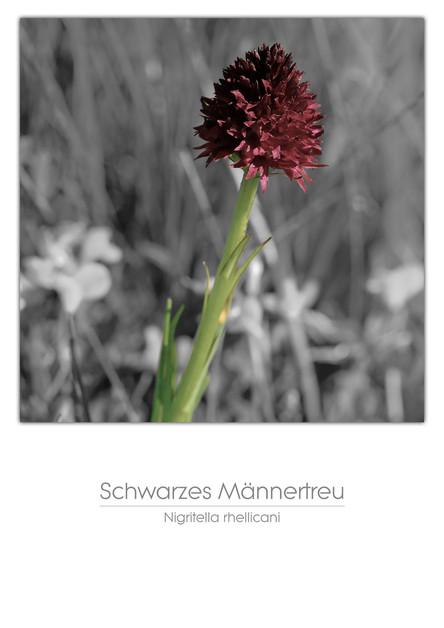 flowers_a4_009.jpg