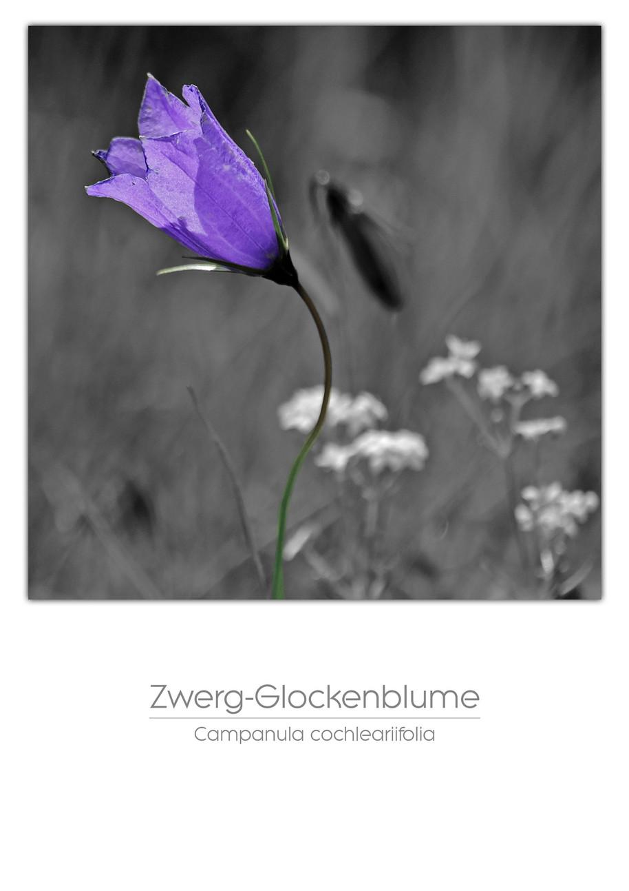 Flowers A4.jpg