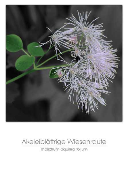 flowers_a4_010.jpg