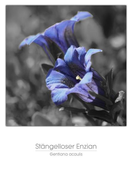 flowers_a4_014.jpg