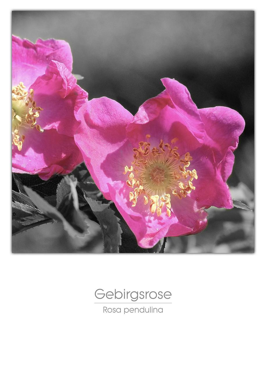 Flowers A4_022.jpg