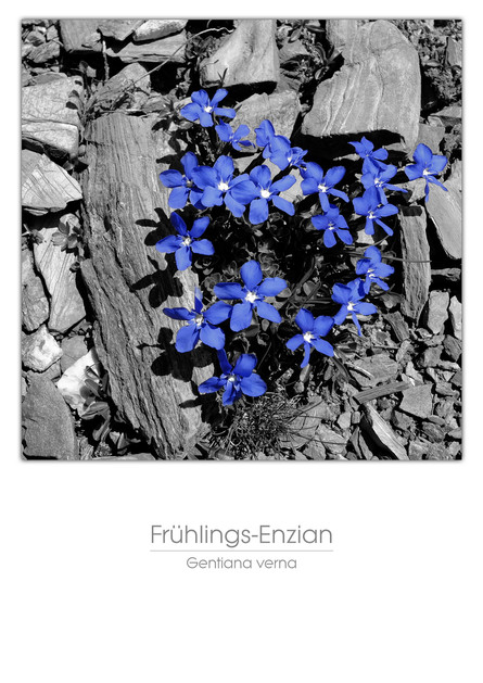 flowers_a4_018.jpg