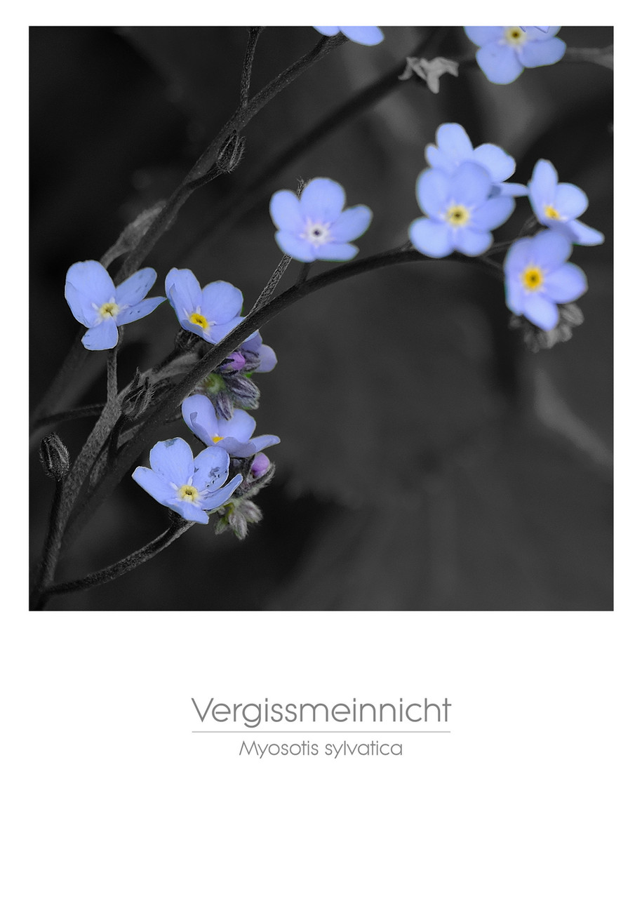 flowers_a4_017.jpg