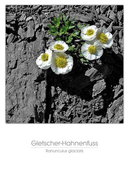 flowers_a4_033.jpg