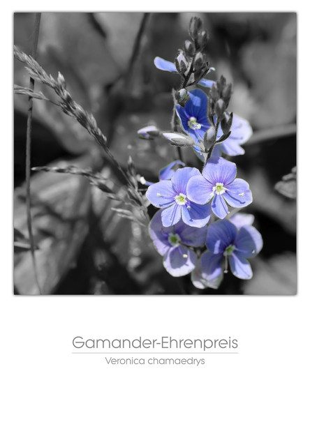 flowers_a4_026.jpg