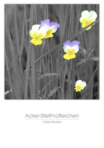flowers_a4_015.jpg