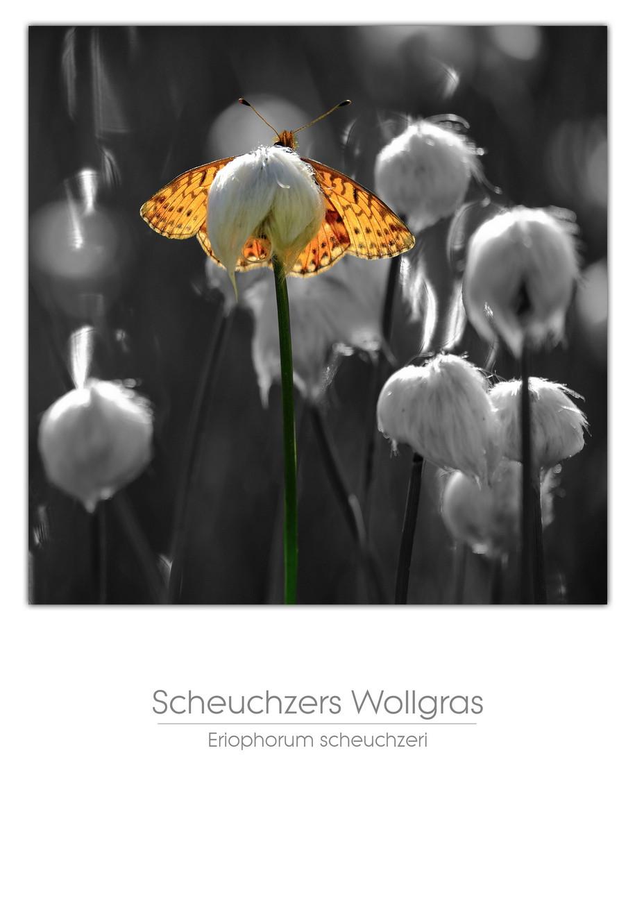 flowers_a4_016.jpg