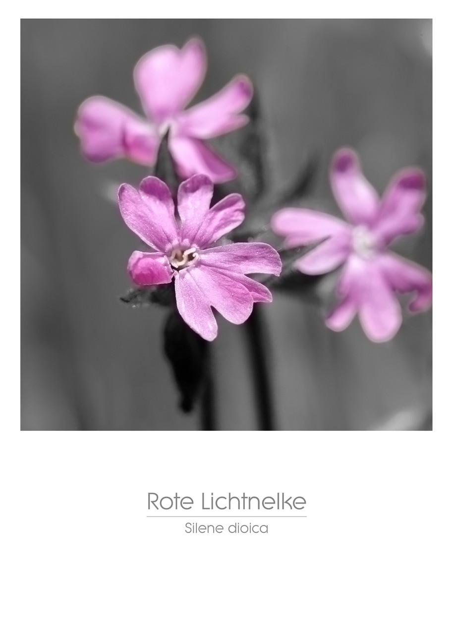 flowers_a4_013.jpg
