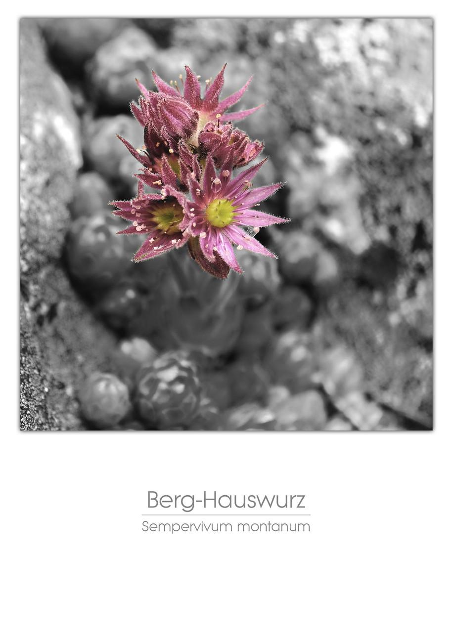 flowers_a4_006.jpg