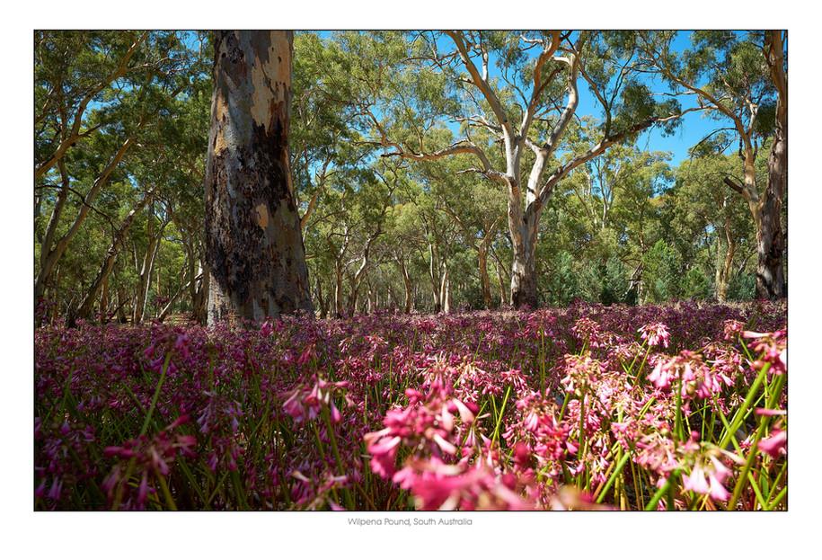 Flinders012.jpg