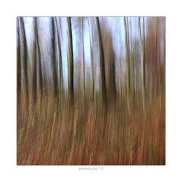 Experimente im Herbstwald