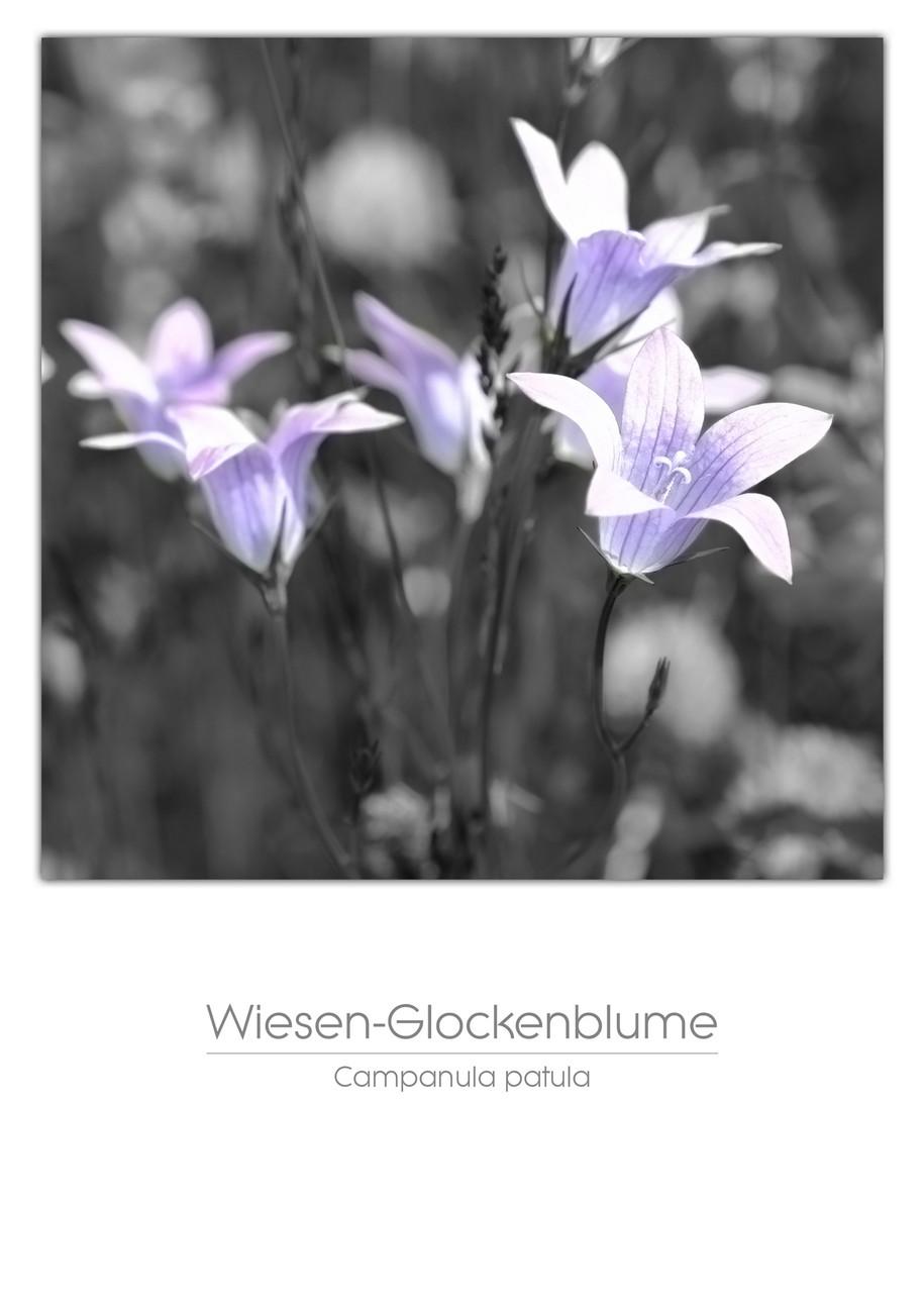 flowers_a4_012.jpg