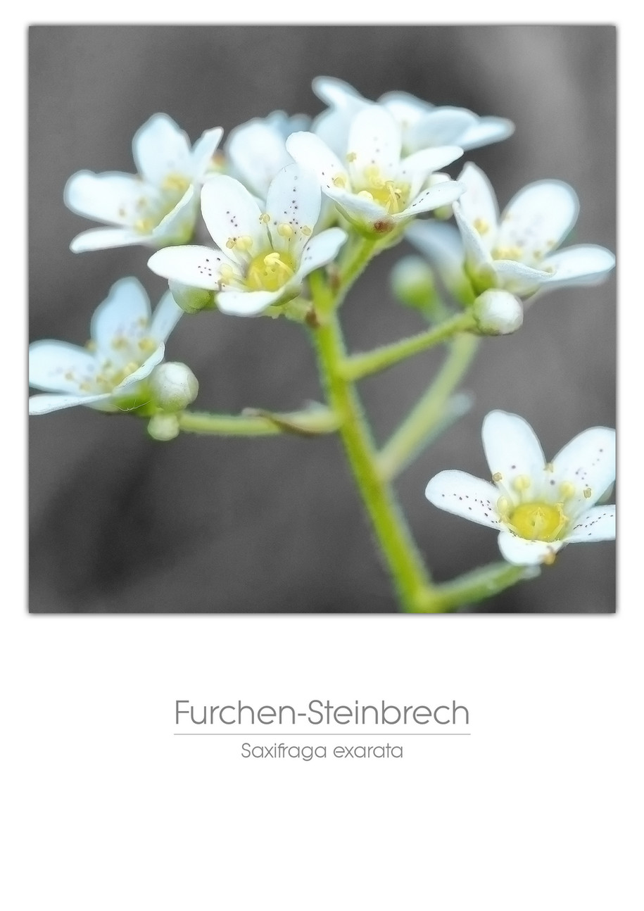 flowers_a4_024.jpg