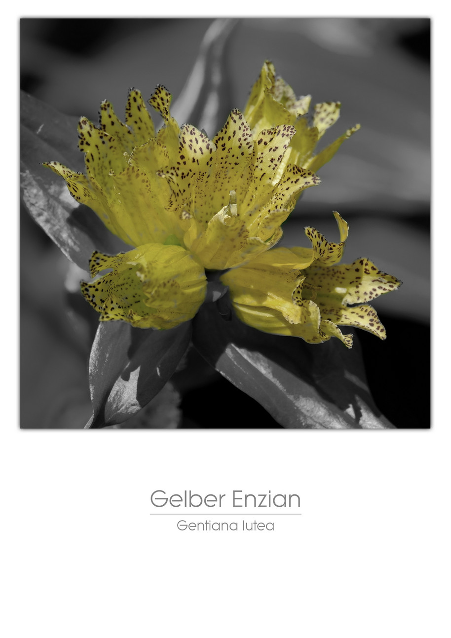 flowers_a4_004.jpg