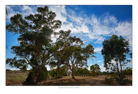 Flinders002.jpg