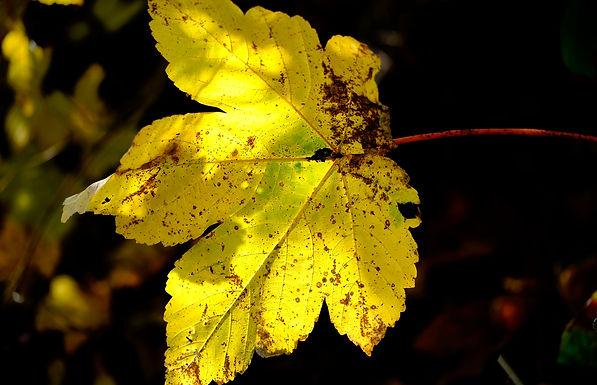 Neues Portfolio: Der Herbst ist zwar bald vorbei...