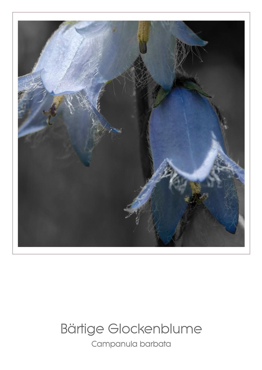 Flowers A4_001.jpg