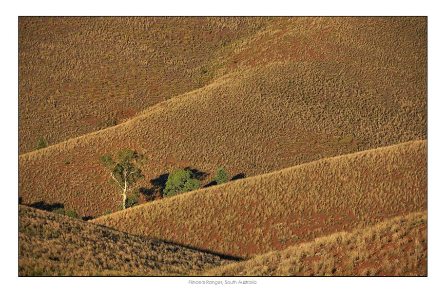 Flinders005.jpg