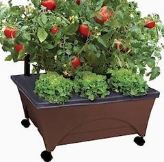 Feed a Friend Mini Garden.jpg