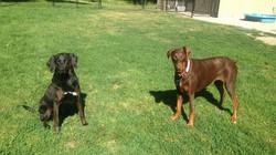Winnie and Harley