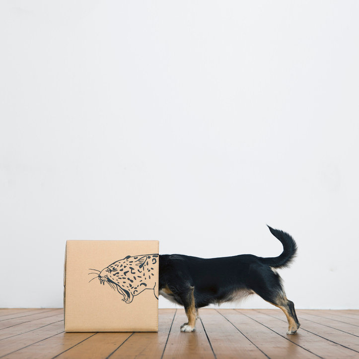 Feurpfeil GmbH - dog with paperbag looking for inspiration.