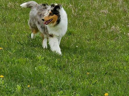 Pixie on the run.jpg