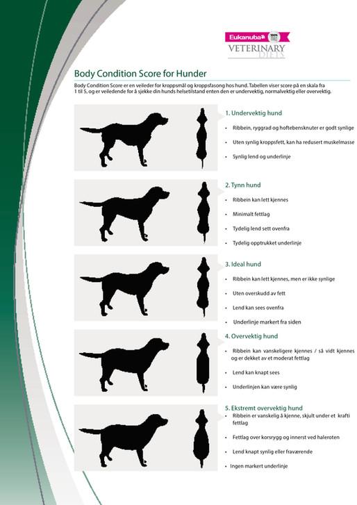 Overvekt hos hund