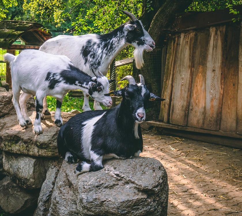Klaushausen Ferienwohnungen und Ferienhaus in Überlingen am Bodensee besucht den Haustierhof Reutemühle