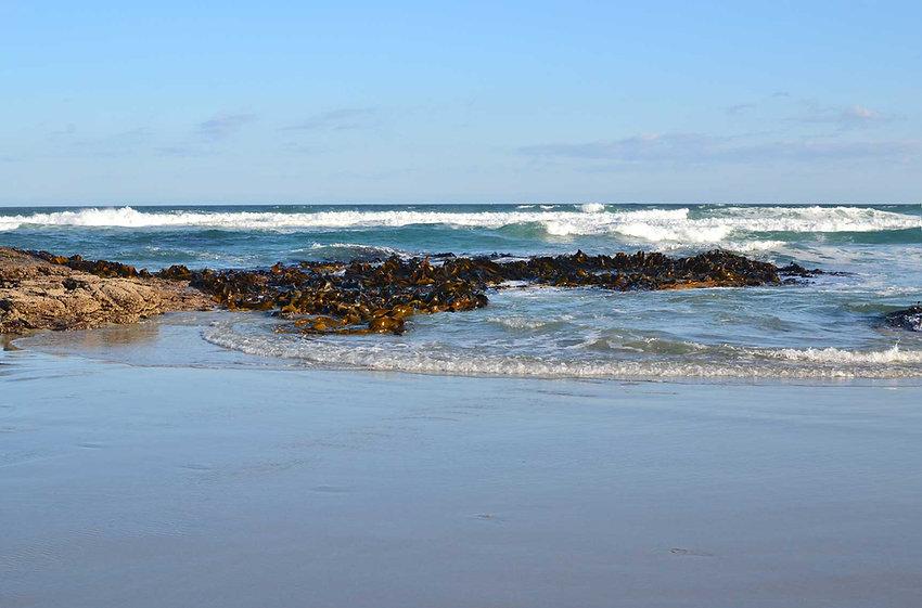 Ocean & Green Seaweed Harvest