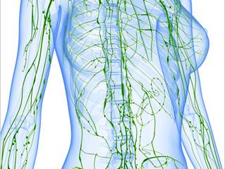 Lymfatický systém a zdraví střev